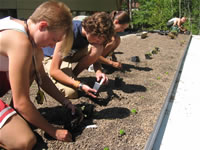 Waldsee students giving life to BioHaus Green Roof.